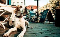 100 Word Rant: Domestic Pets in Public Places
